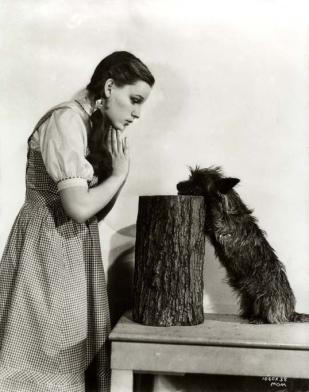 November 5, 1938 Dorothy-Toto