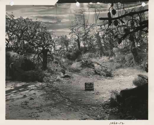 January-3,-1939-Haunted-Forest